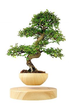 Levitating Bonsai Pot for Floating Air Plants Home Office Decoration and Gift - WAHMMO