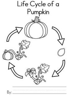 Life Cycle of a Pumpkin Worksheet | More Worksheets and Cycling ideas