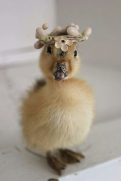 Vintage Taxidermy Easter Duck in Easter Bonnet.