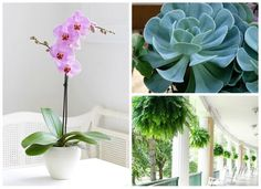 12 Air-Purifying Houseplants Safe for Dogs Cats