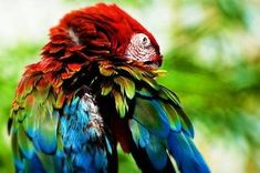 34 Stunning Pictures Of Exotic Birds Colorful Parrots, Colorful Fish, Pink Cockatoo, What's My Favorite Color, Favorite Things, Rainbow Magic, Exotic Birds, Beautiful Birds, Beautiful Things
