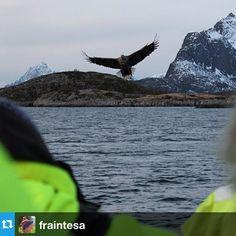 Il saluto dell'aquila di mare durante il nostro tour con il Lofoten Explorer #MagicNorway  http://www.volagratis.com/promo/diari-di-viaggio/magic-norway/tappe/tappa-IV.html
