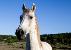 Rancheros close encounters with animals Close Encounters, Horses, Ranch, Animals, Guest Ranch, Animales, Animaux, Horse, Animal Memes