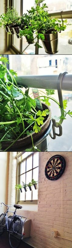 DIY Home Garden On Your Window Sill