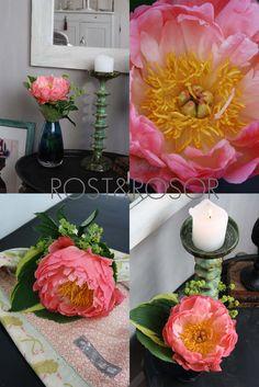 RUST AND ROSES: A mais bonita de peônias ...