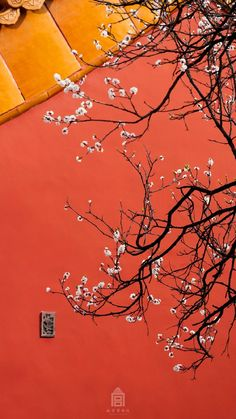 Apricot flowers enter full bloom in the Imperial Palace, or the Forbidden City, in Beijing, capital of China, March Chinese Element, Painting Snow, Chinese Garden, Chinese Door, Ancient Beauty, Chinese Architecture, China Art, Chinese Calligraphy, Chinese Culture