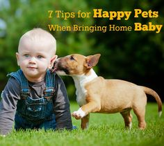 Keep the pets happy when you bring home baby with these tips.