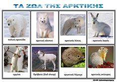 Το νέο νηπιαγωγείο που ονειρεύομαι : Τα ζώα της Αρκτικής - Πίνακες αναφοράς Polar Animals, Funny Animals, Polo Norte, Winter Activities, Arctic, Kids Learning, Sheep, Kindergarten, Preschool