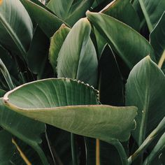 PLANT IT | @woolandthegang