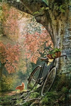 Bicycle..