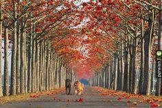 مسیرهای شگفت انگیز پیاده روی در جهان   داستان راه رفتن، قدم زدن، پیاده روی و دست در دست دوست به مسیرهای دوردست نگاه کردن، بخش مهمی از تاریخ