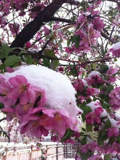 Spring snow in Colorado...looks pretty, would love to go someday....soon