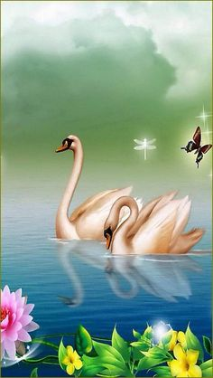 By Artist Unknown. Swan Wallpaper, Flower Wallpaper, Beautiful Swan, Beautiful Birds, Bird Pictures, Nature Pictures, Image Nature Fleurs, Images Vintage, Art Impressions