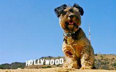 Oscar em Hollywood