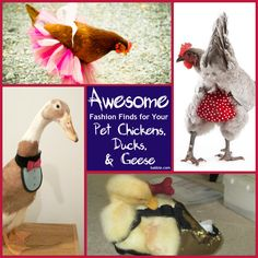 Fashion Fowl: Awesome Fashion Finds for Your Pet Chickens, Ducks, and Geese