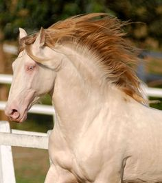 This horses color is almost unbelievable! NEVER seen a blazing red mane on a horse of this color....GODS design for sure!!