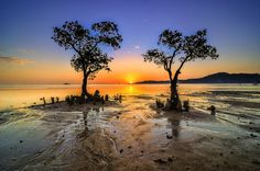 Twin trees at sunset