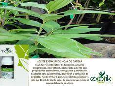 Aceite esencial de hoja de canela.  Cinnamon leaf essential oil.
