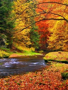 Autumn landscape, colorful leaves on trees, morning at river. Vinyl Wall Mural - Seasons Autumn landscape, colorful leaves on trees, morning at river. Wall Mural ✓ Easy Installation ✓ 365 Days to Return ✓ Browse other patterns from this collection! Fall Pictures, Fall Photos, Nature Photos, Pretty Pictures, Cool Pictures Of Nature, Amazing Pictures, Autumn Scenes, Amazing Nature, Belle Photo