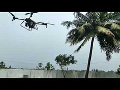 Drone Technology Demonstrate spraying over the coconut tree. Credit drone tech Drone Technology, Around The Worlds, Coconut