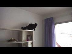 Mission: Impurrrsible - Love Meow