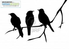Higher Resolution Birds Silhouettes On The Branch