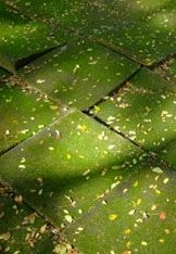 Groene aanslag, mos, onkruid en algen makkelijk en goedkoop verwijderen. Snel en effectief. - Plazilla.com