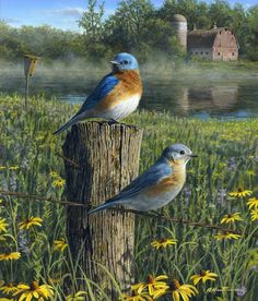 Bluebirds and Prairie by Robert Hautman …