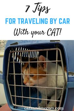 Taking a road trip with your cat? We have 7 Tips to take the stress out of traveling. The first one I followed was purchasing a well ventilated Carrier.