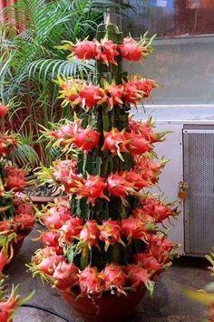 All plants. Fruit Plants, Fruit Garden, Edible Garden, Cool Plants, Fruit Trees, Trees To Plant, Cactus Plants, Garden Plants, Exotic Fruit