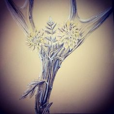 Charcoal drawing of an antler and some flowers. I never finished it!