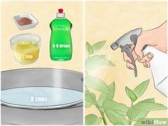 Image titled Get Rid of Aphids Step 8 How To Kill Aphids, Get Rid Of Aphids, Getting Rid Of Aphids, Get Rid Of Flies, Get Rid Of Ants, Garden Insects, Garden Pests, Garden Bugs, Herbs Garden