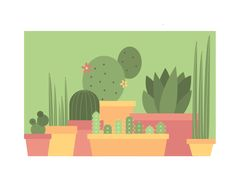 Cacti and other succulents