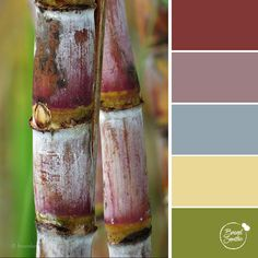 Red Sugarcane colour palette by Brand Smoothie