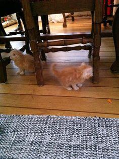 Roligt att busa under stolarna