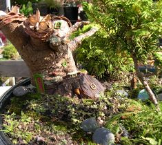 cute and cleaver fairy garden