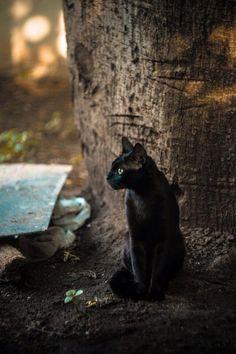 The Cult Cat @Elverojaguar