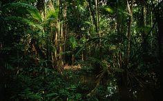 3.De belangrijkste ruimte in het boek Water & Vuur is het oerwoud. In het oerwoud begint de Zwavelloop. Dit is een de wedstrijd voor een medicijn dat iemands leven kan redden. Tella ontmoet in het oerwoud ook veel nieuwe mensen. De sfeer is erg gespannen, want iedereen wil als eerste bij het basiskamp zijn voor het medicijn.
