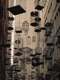 "Allegedly, this is a place called Bird Street in Hong Kong; looks like all the residents ""flew the coop."