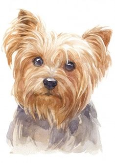 Water colour painting of yorkshire terri. Perros Yorkshire Terrier, Yorkshire Dog, Watercolor Pictures, Watercolor Animals, Watercolor Painting Techniques, Watercolor Paintings, Watercolor Wallpaper, Watercolor Background, Animal Paintings