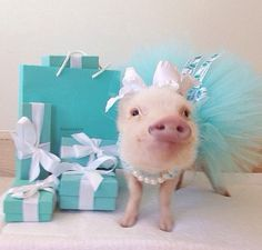 Our Latest Instagram Obsession: Tiny Pigs in Human Clothes
