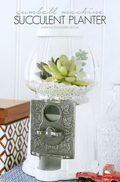Gumball Machine Succulent Planter. What a cute home decor idea!