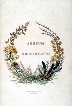 'Sertum orchidaceum' (Latin): a wreath of the most beautiful orchidaceous flowers selected by John Lindley (1838).  Orchidaceous flowers are orchids