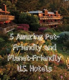 5 amazing pet-friendly and planet friendly u.s. hotels