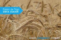 Saiba mais sobre o uso do farelo de trigo na dieta dukan. Veja a importância e os benefícios do uso deste farelo na dieta. Confira agora mesmo!