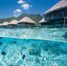 Moorea overwater bungalows. Affordable and downright beautiful!!! Takes the cake on Honeymoon Ideas in French Polynesia