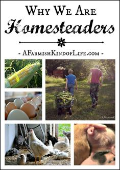 Why We are Homesteaders - A Farmish Kind of Life