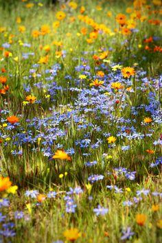 Der Traum von einer Blumenwiese