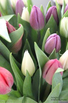 Love seeing an arrangement of tulips in my living room Flowers Nature, My Flower, Spring Flowers, Beautiful Flowers, Weird Plants, Beautiful Nature Pictures, Belleza Natural, Dream Garden, Flower Photos