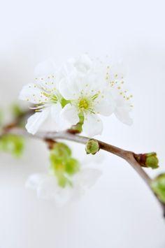 ╰✿... Spring Inspiration.
